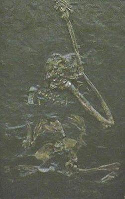 Oreopithecus im Instituto de Paleontología Miquel Crusafont