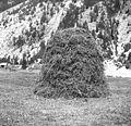 Ostrgača sena, Trenta 1952.jpg