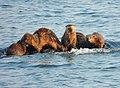Otter Family.jpg