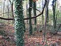 Overton Park Old Forest Trail Memphis TN 3.jpg