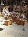Oxford natura museum.jpg