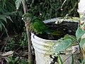 Pássaro 8 - panoramio.jpg