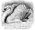 PSM V02 D461 Protective swan.jpg