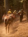 Pack Mules Passing Firefighters (15755948843).jpg