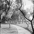 Pad langs bomen waaronder een groepje mannen en vrouwen zit, Bestanddeelnr 255-3212.jpg