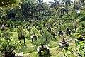 Padmanabhapuram Bonsai Garden.jpg