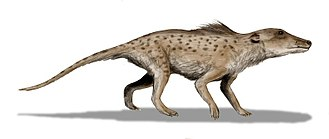 Transitional fossil - Reconstruction of Pakicetus