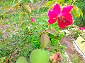 Panna, Madhya Pradesh 485661, India - panoramio (11).jpg