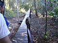 PantanalBoardwalk.JPG