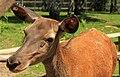 """Parcul de Animale - """"Moara de Vant"""" (7403386254).jpg"""