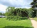 Paris-FR-75-Bois de Boulogne-28 mai 2019-arbres-3.jpg