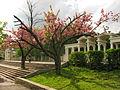 Park Bogdana Khmelnickego Lviv-138.JPG