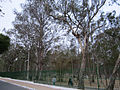 Parque Euclides Dourado (Parque dos Eucaliptos) - Garanhuns, Pernambuco, Brasil.jpg