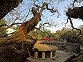 Pataleshwar caves -Pune -Maharashtra - 001.jpg