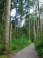 Path (3813048531).jpg