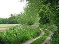 Path from Dowlesgreen - geograph.org.uk - 1299906.jpg