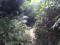 Path inside the forest.jpg