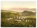 Peace and plenty, England-LCCN2002708360.tif