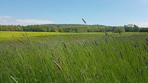 Peaceful Meadow.jpg