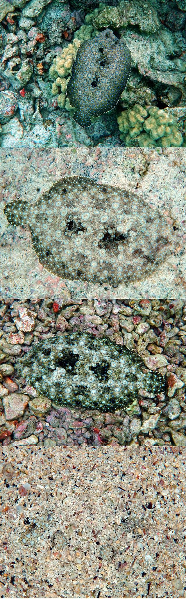 German World War II camouflage patterns - Wikiwand