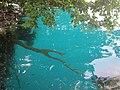 Peces en el Cenote Azul, Q. Roo - panoramio.jpg