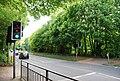 Pedestrian Crossing, A264, Pembury Rd - geograph.org.uk - 1302312.jpg
