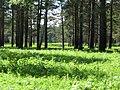 Pervomaysky District, Tomsk Oblast, Russia - panoramio (7).jpg