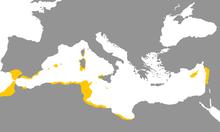 Phoenician Language.png