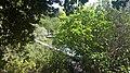 PikiWiki Israel 35060 Banias.jpg