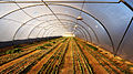 PikiWiki Israel 40246 Agriculture in Israel.jpg