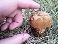 Pilz im Garten 2.jpg