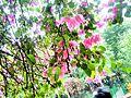 Pink flowers 4.jpg