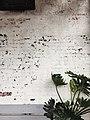 Plant against a wall (Unsplash).jpg