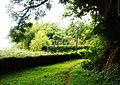 Plantation path.jpg