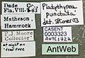 Platythyrea punctata casent0003323 label 1.jpg
