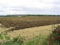 Ploughed field near Bywell - geograph.org.uk - 547439.jpg