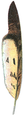 Plume de Hibou (Millot-1907).png