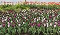 Poertschach Johannes-Brahms-Promenade Tulpenbeet 16042017 7674.jpg