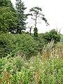 Pond at woodland edge - geograph.org.uk - 1410204.jpg