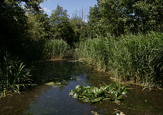 Camley Street Natural Park - A pond in Camley Street Natural Park.