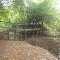 Pont en bambou.jpg