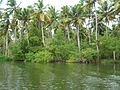 Poovar backwaters view, Kerala, India.jpg