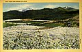 Portland OR - Pear Orchards in Bloom (NBY 432461).jpg