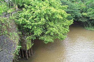 Paronella Park - Hydro Plant from swing bridge over Mena Creek Falls