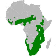 Ptyonoprogne fuligula distribution map.png