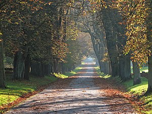 Horse-chestnut avenue in the City Park of Putbus, Germany