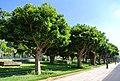Quartier Des Orangers, Rabat, Morocco - panoramio.jpg