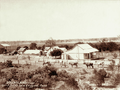 Queensland State Archives 2526 Smiths farm and vineyard at Roma c 1898.png