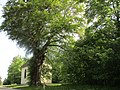 Quirinskapelle Gosheim (105).jpg