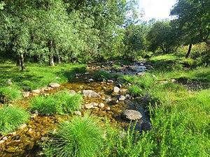 Río Cambrones 2.jpg